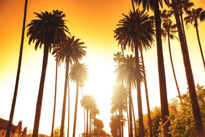 sunset booulevard is that famous palm tree street in los angeles