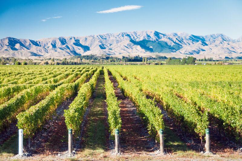 Vineyard, New Zealand