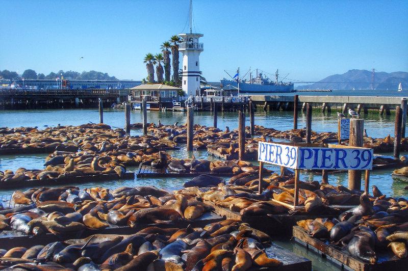 Sea Lions on pier