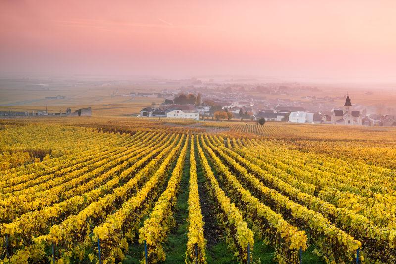 Vineyards in France, Europe