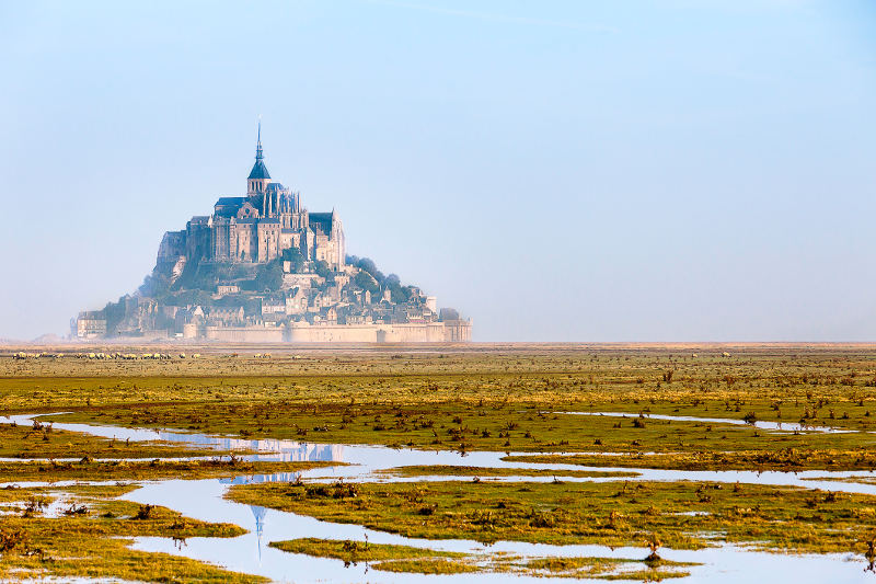 mont saint michel with sheep fields in foreground