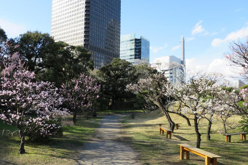 garden path with city backdrop