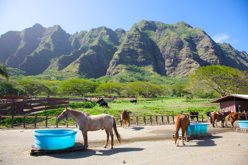 horses with hawaiian mountains behind