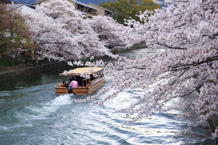 Okazaki canal - lake biwa canal with cherry blossoms in bloom - romantic travel experiences for valentines day