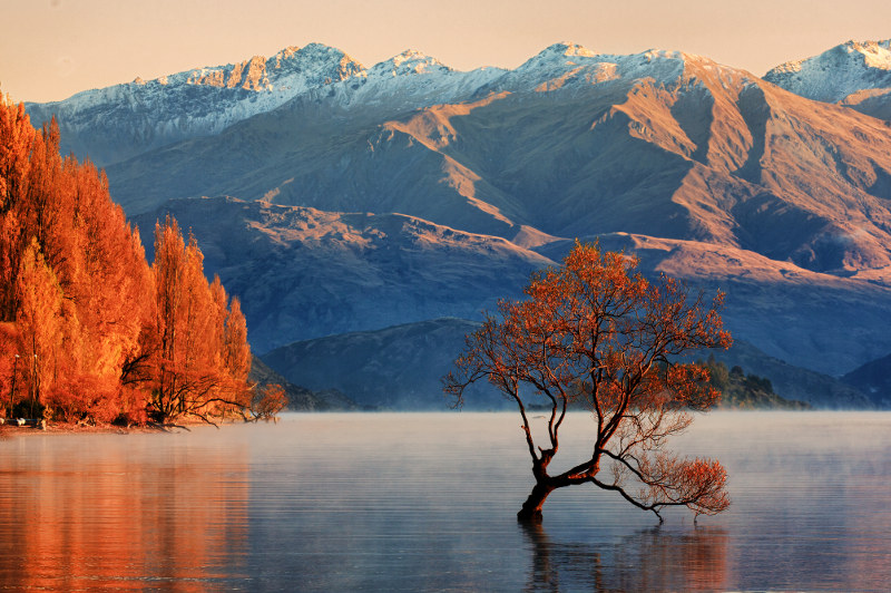 The Wanaka Tree, New Zealand