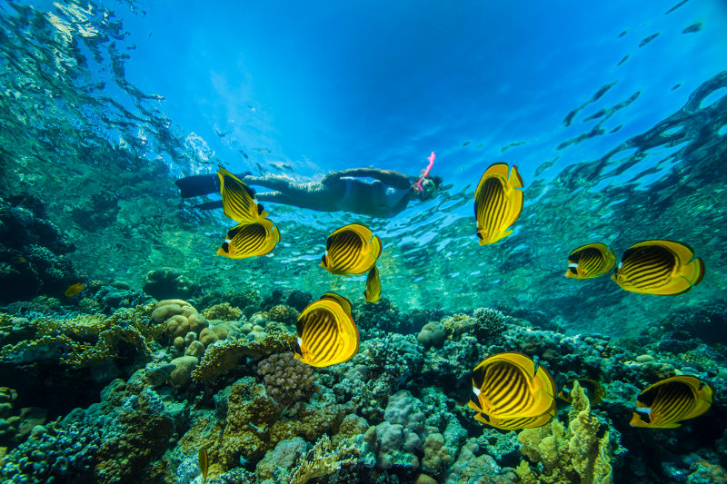 Woman snorkeling among tropical fish