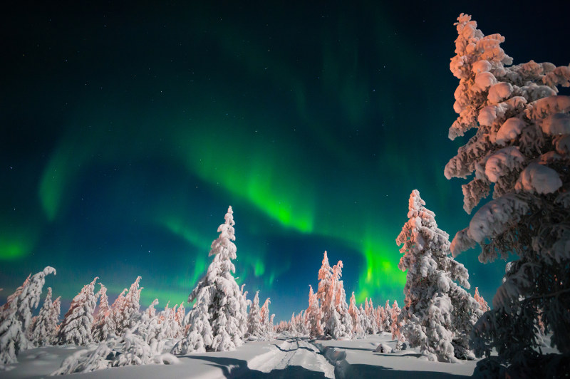 northern lights above snow covered trees