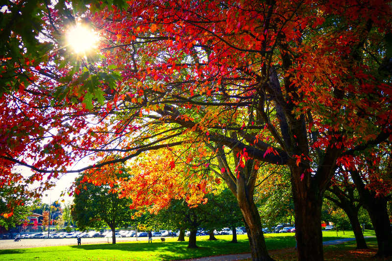 Autumn leaves in park, Vancouver