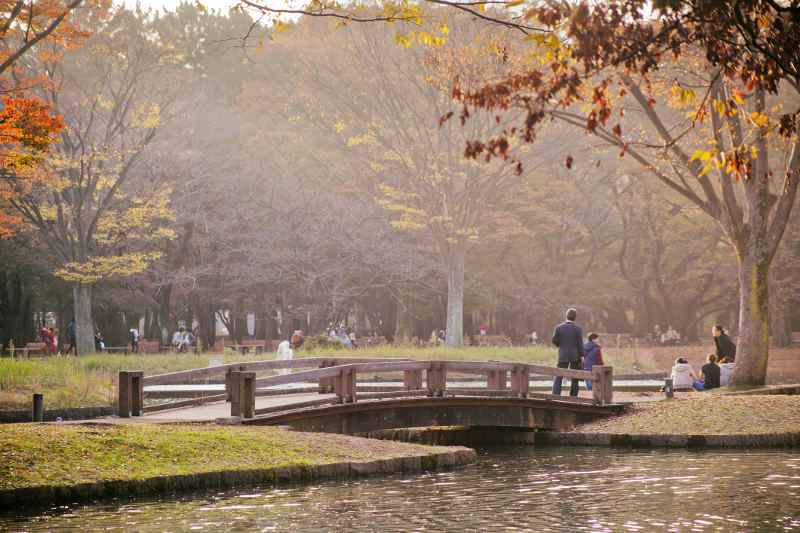 yoyogi park winter