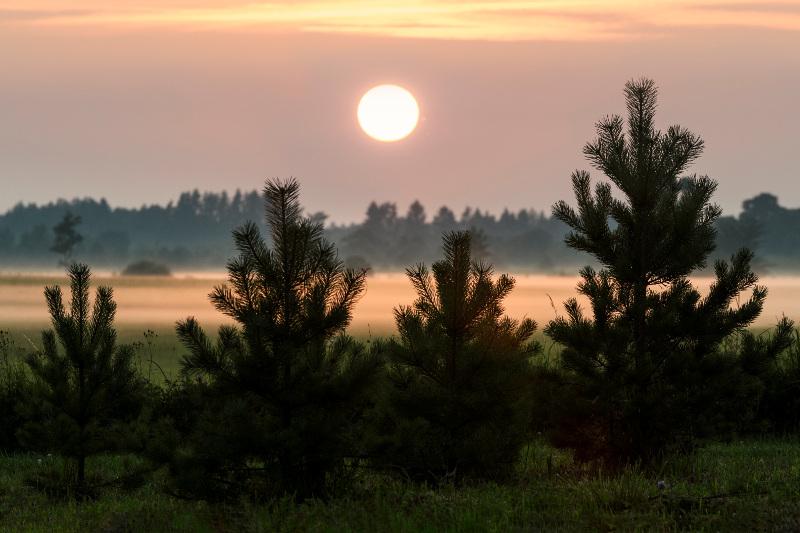 Lahemaa National Park at dusk