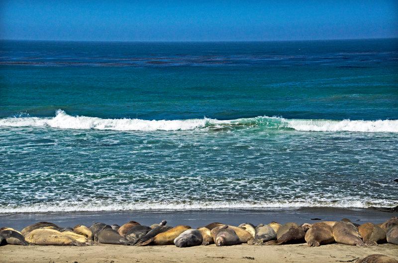 San Simeon beach, California