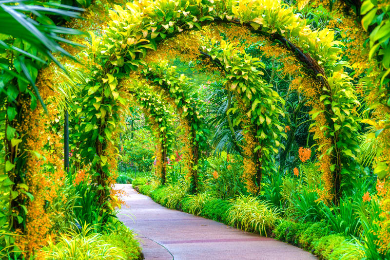Archway covered in plants, Botantic Gardens Singapore