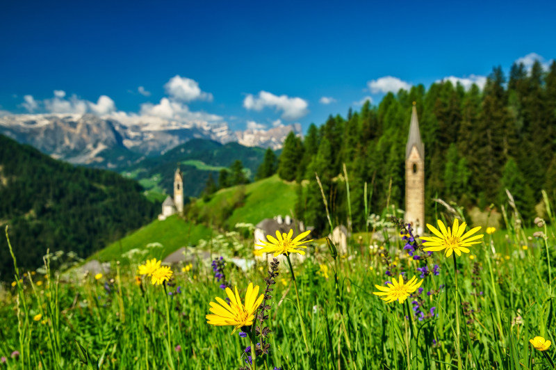 wildflowers on alpine hillside