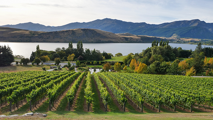 Queenstown's wineries are some of the best for pinot noir, chardonnay and sauvignon blanc