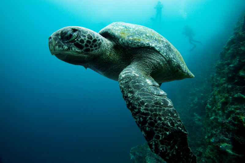 The Galapagos' waters are rated one of the seven underwater wonders ...