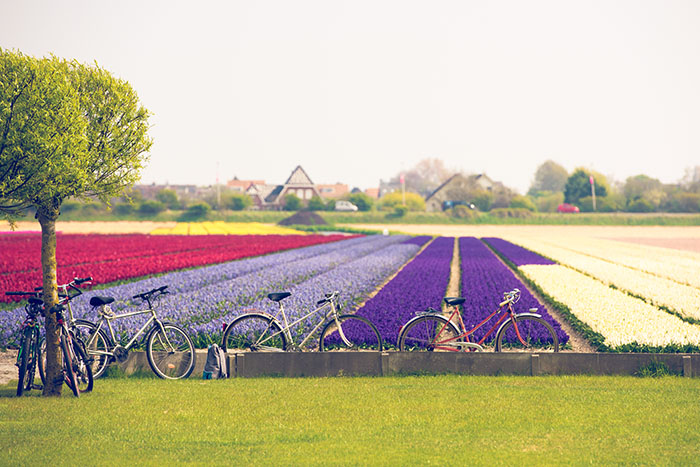 bikes in countryside netherlands