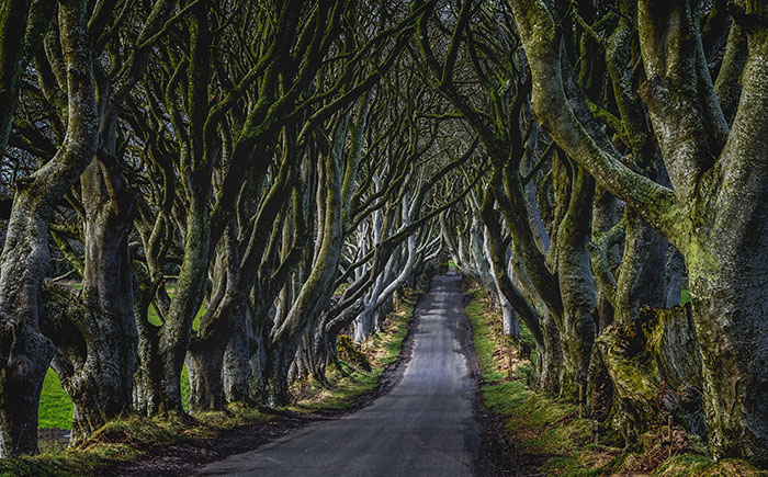 the dark hedges or the kindsroad from game of thrones northern ireland