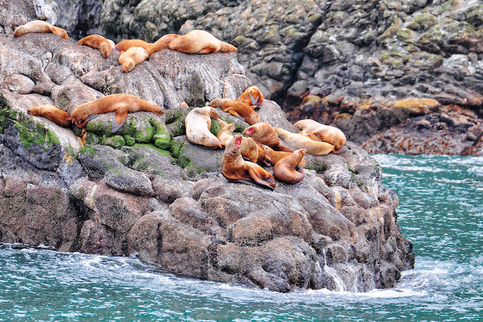 A colony of sea lions on a rock in Seward, seen from a luxury cruise