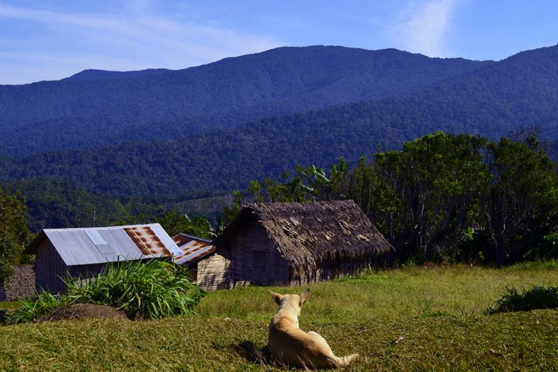 Dog in Kokoda village, PNG