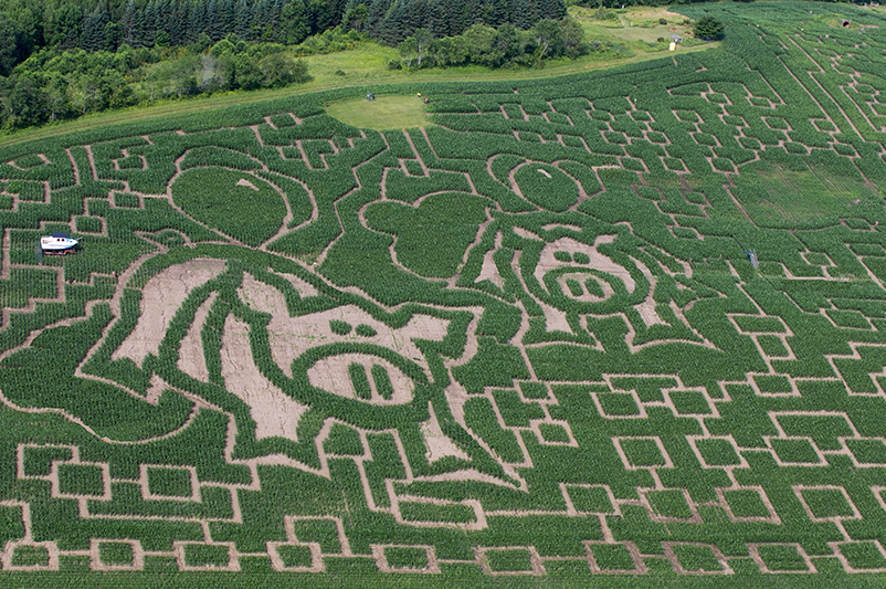 An aerial view of the 2019 Great Vermont Corn Maze