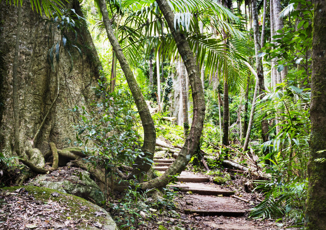 Rainforest path on Mt Warning, New South Wales