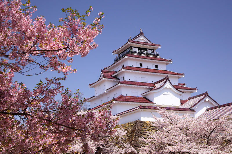 Cherry blossoms frame Himeji Castle in Japan.