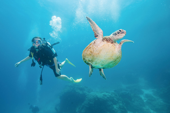 scuba diver and turtle great barrier reef