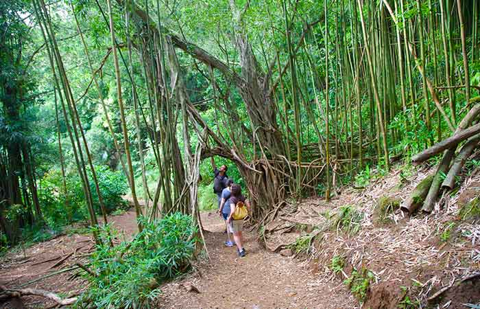 Hiking to the local waterfalls, top things to do in Hawaii