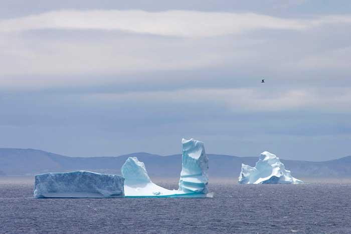 ice berg alley