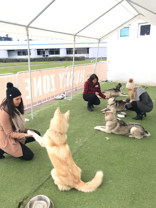 husky rescue NZ visits the Antarctic Centre in Christchurch