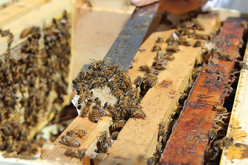 Onsite rooftop hive at Fairmont San Francisco hotel