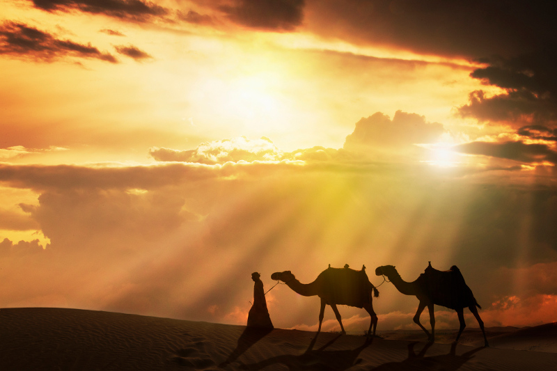 A man leading camels in the Arabian desert.