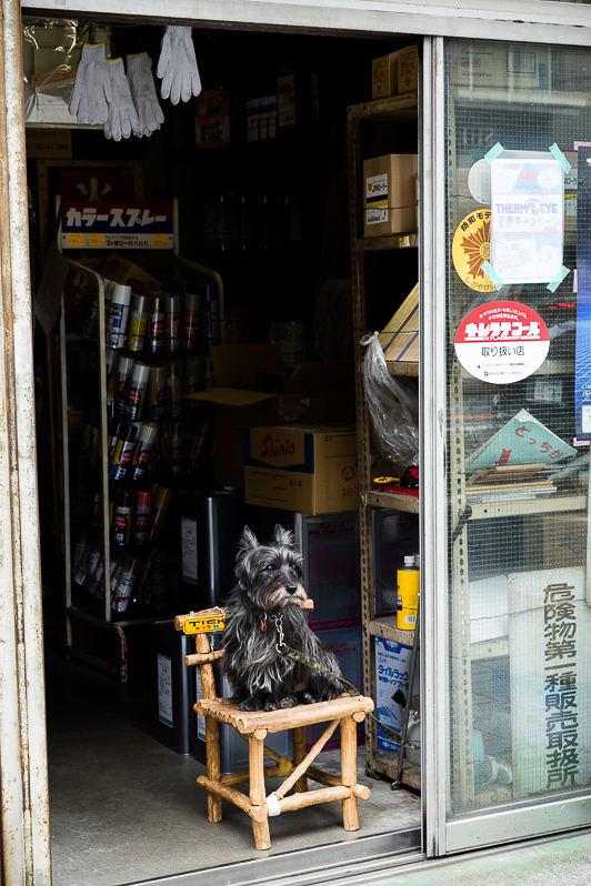 dog on chair at shopfront