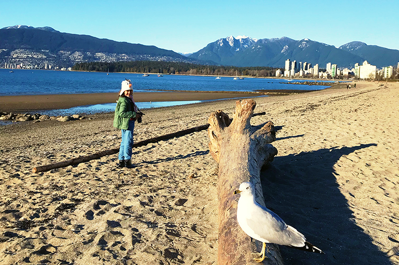 Seagull on log at Kitsilano Beach, Vancouver