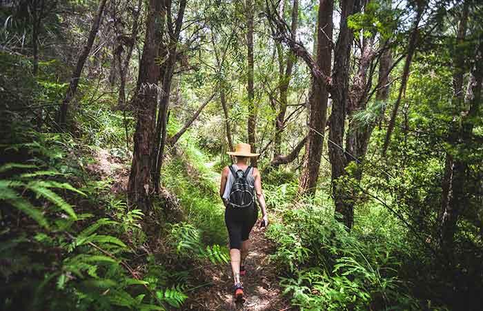 Lamington National Park, Gold Coast Hinterland
