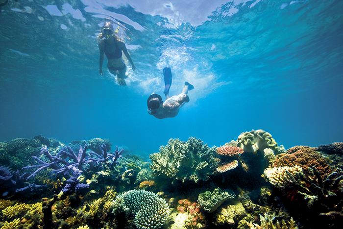 diving lizard island great barrier reef