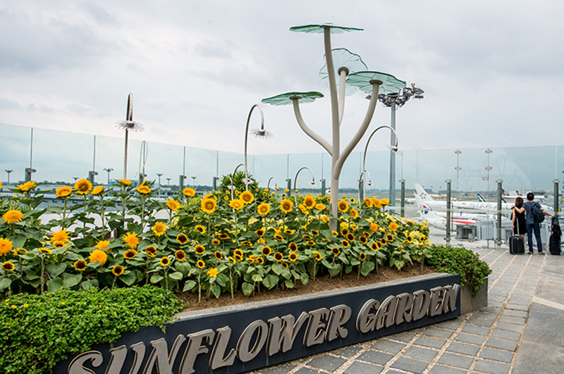 The Sunflower Garden in Terminal 2, Singapore Changi Airport
