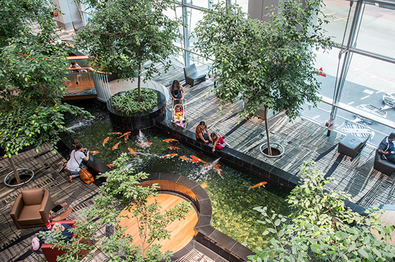 Aerial view of the Terminal 3 koi pond at Singapore Changi Airport