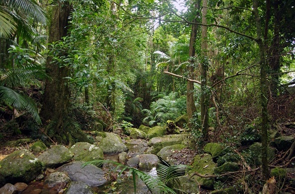 rainforest in national park nsw