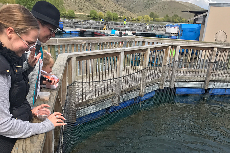 Three females feeding salmon at a New Zealand salmon farm.