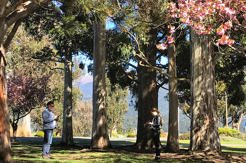 Two people using smartphones in a Queenstown park.
