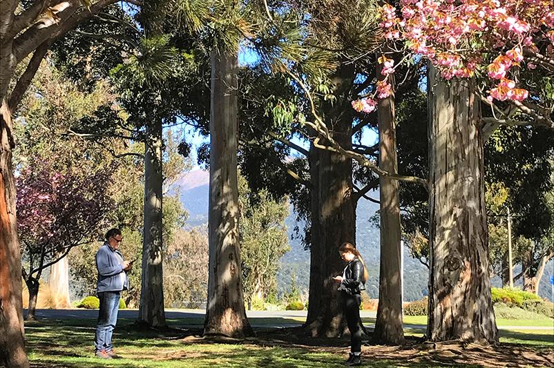 Two people using smartphones in a Queenstown park.