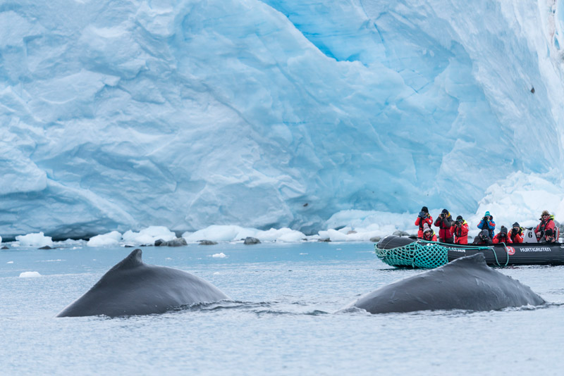 Paradise Bay, Antarctica. Image: Chelsea Claus for Hurtigruten