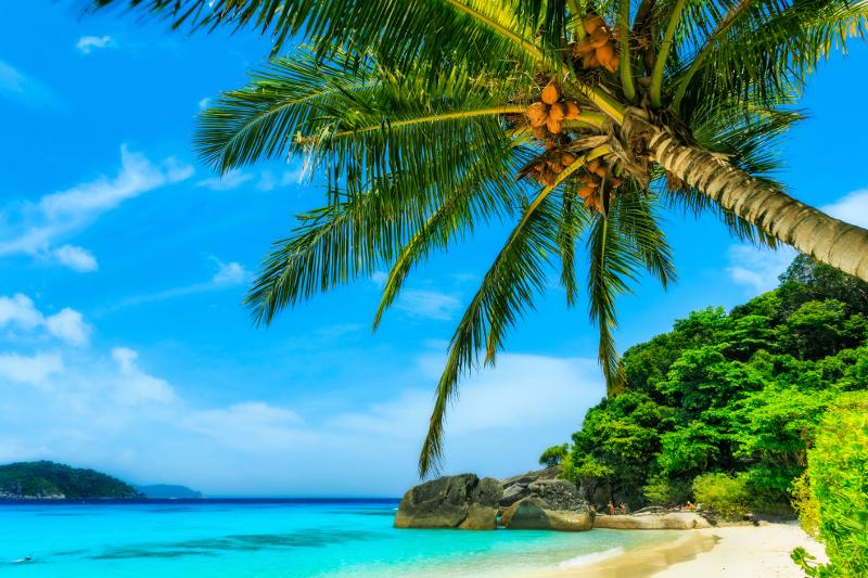 Beautiful beach in Phuket framed by palms.