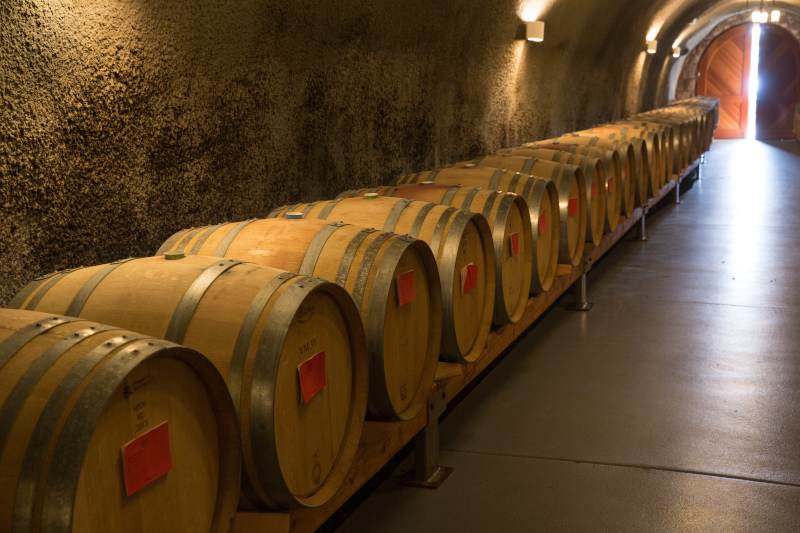 A number of wine barrels lined up in a cellar