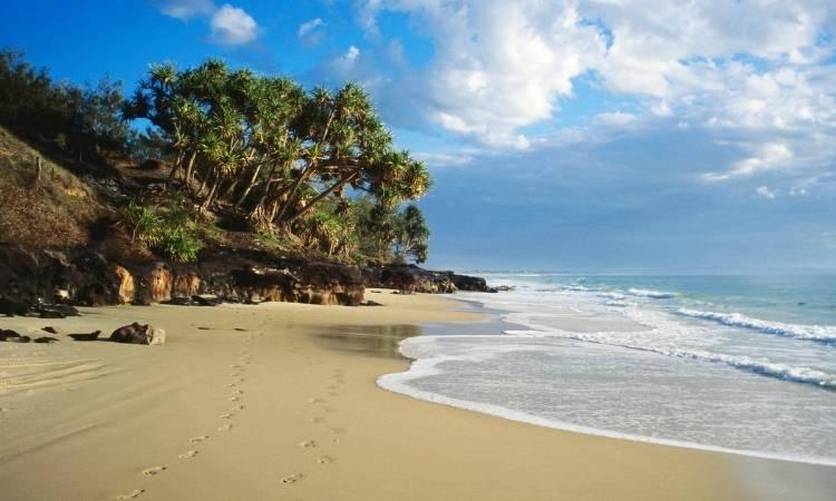 Sea, sand and trees