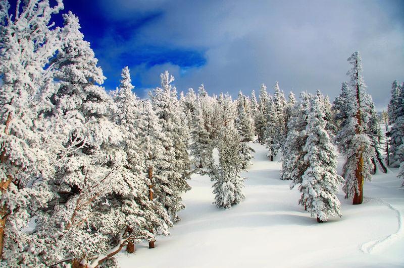 snowy landscape in california