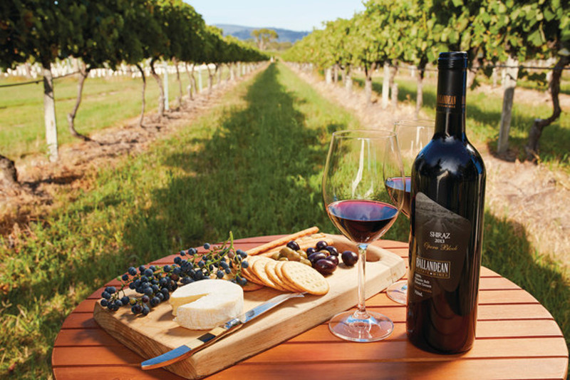 wine and cheese platter in vineyard, southern queensland country