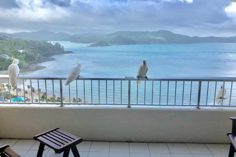 cockatoos on balcony overlooking tropical islands