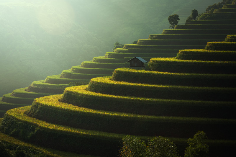 terraced rice fields, Vietnam